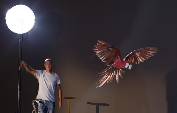 Flying parrot on set with Anthony Bloom